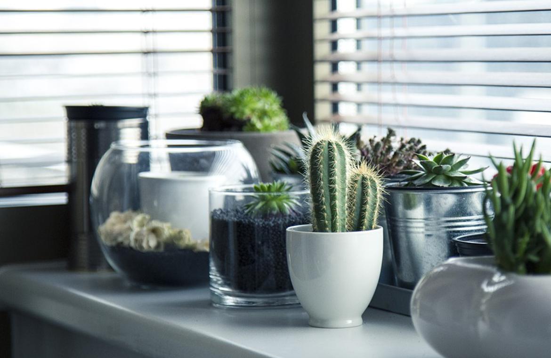 Deja que la naturaleza entre en tu hogar